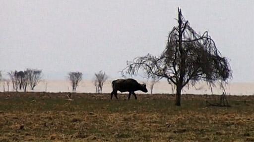 Cestománie: Tanzanie - Africká safari