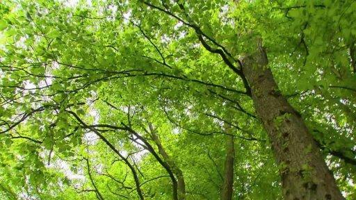 Nedej se!: Za brouky na stromy