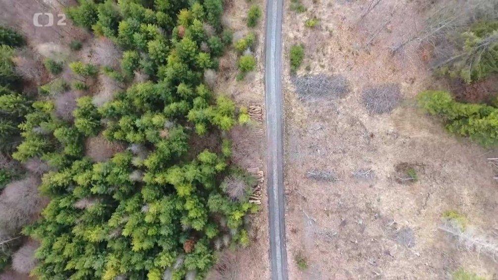 Nedej se!: Lesy bez budoucnosti?