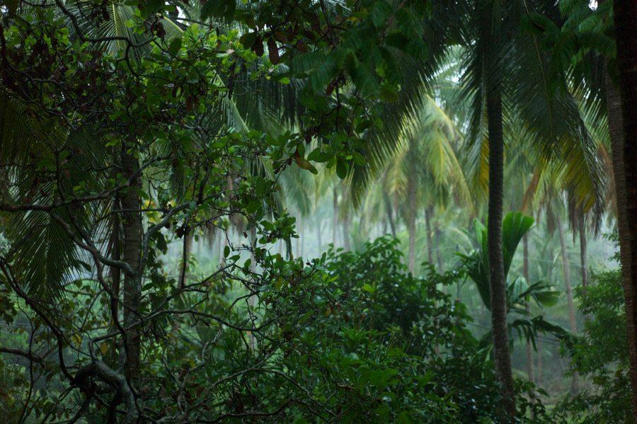 Výsledek obrázku pro tropický deštný les