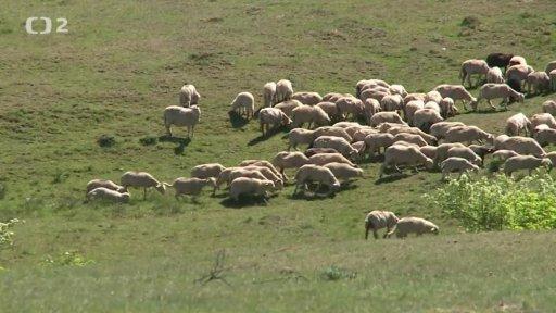 Náš venkov: Velké ovčí putování