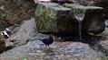 Tak to vid�m j�: Fejeton Vlastimila F�rsta – �iv� voda