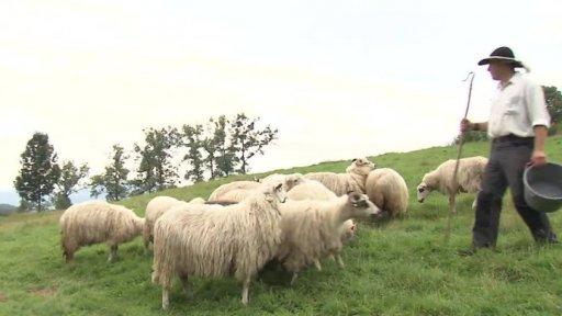 Folklorika: Pásli ovce...