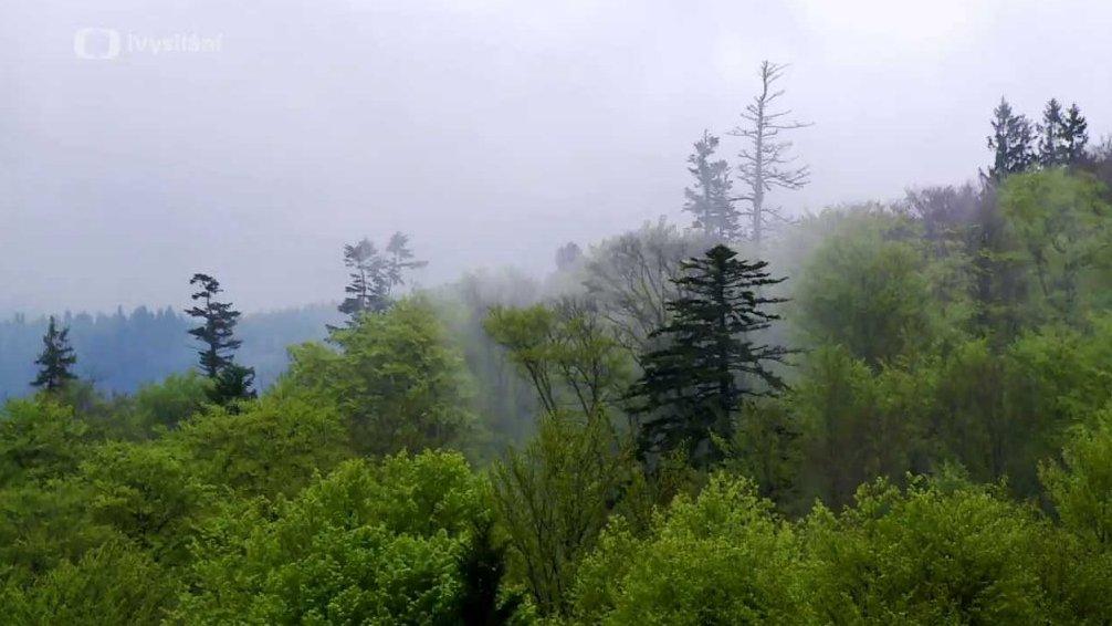 Minuty z přírody: Prales Mionší