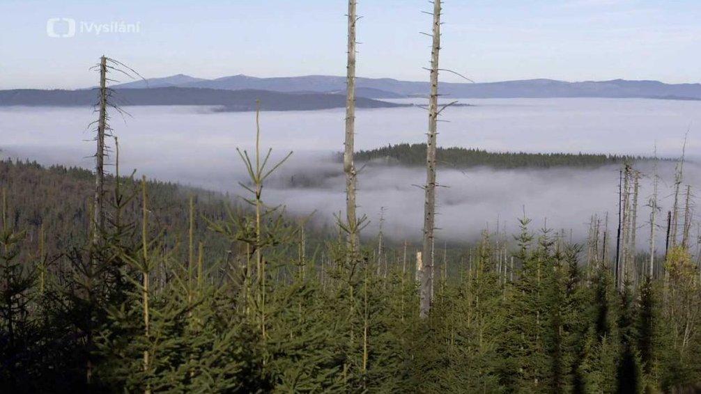 Minuty z přírody: Horská smrčina