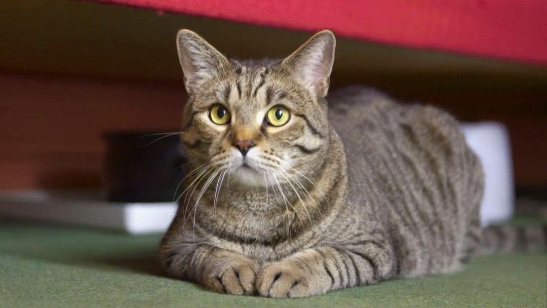 Kočka není pes: Mlsný Ferda a neposlušná smečka kříženců