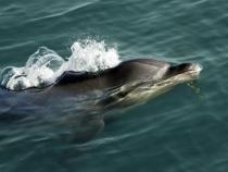 Delfín – tvor společenský