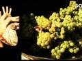Vinný paradox