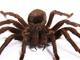 Fascinující pavouci