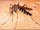 Krvežízniví komáři