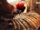 Tunel Blanka odhaluje minulost