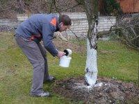 Ochrana ovocn�ch strom� p�ed mrazem