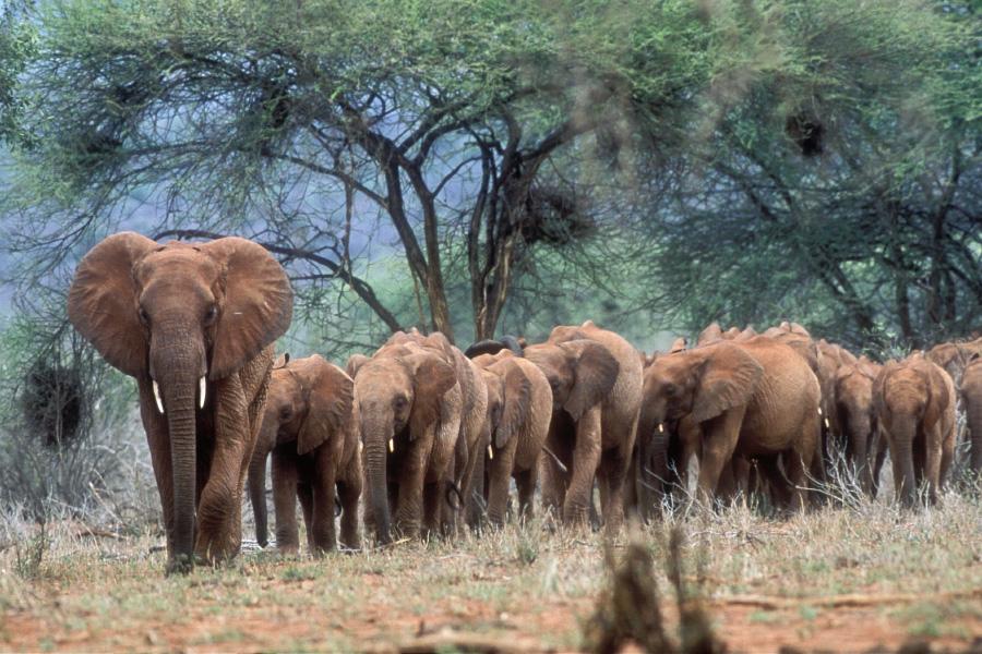 Připojte se ke kamarádům v Keni