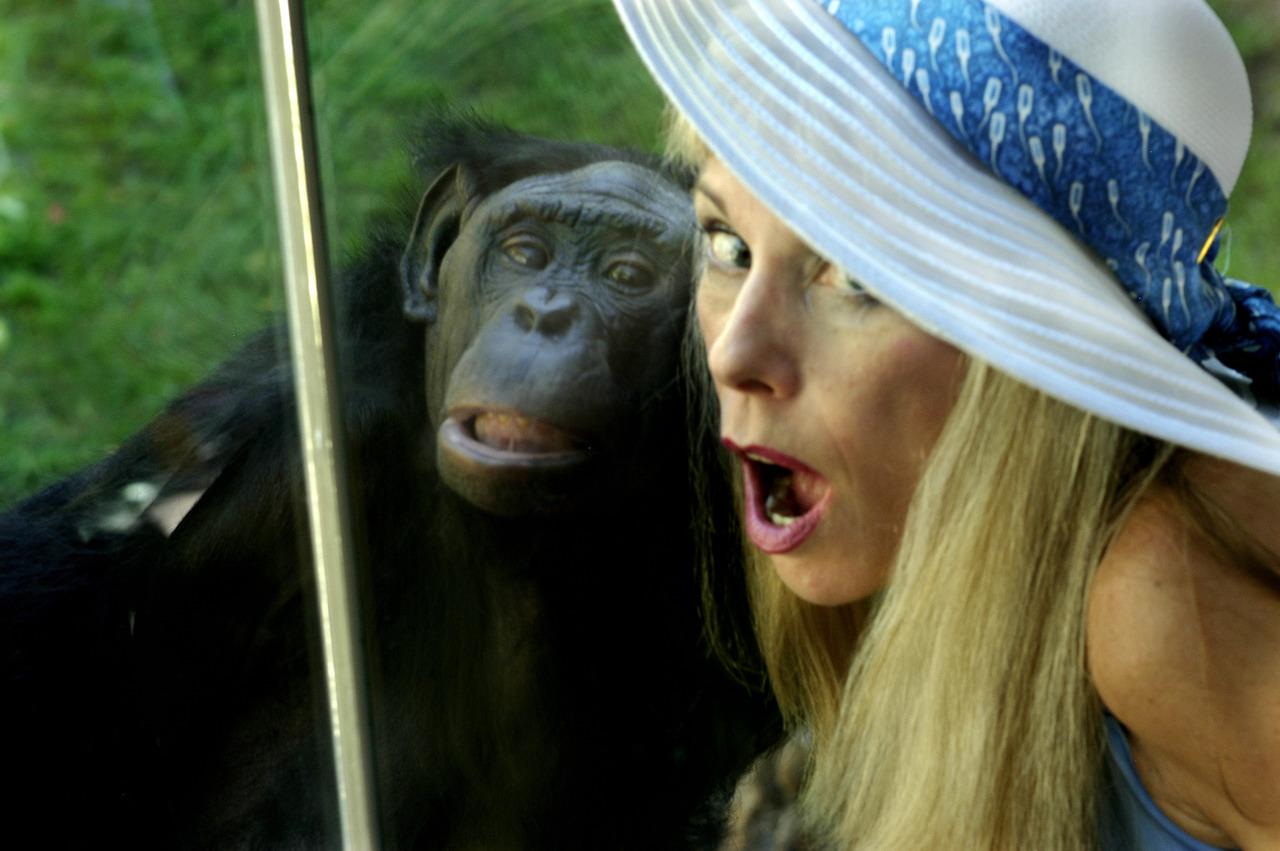 Sexuální opice
