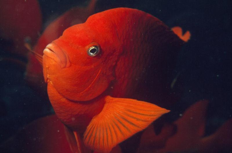 ryby v moři připojte místo datování zdarma aplikace jako badoo