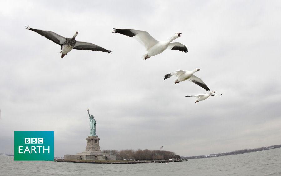 Závislý na velkých ptácích