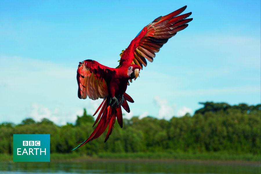 miluji obrovské ptáky horké vгdeos xxx