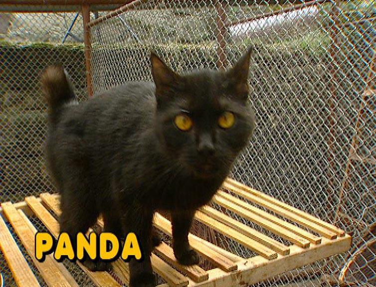 velká kočička lipa