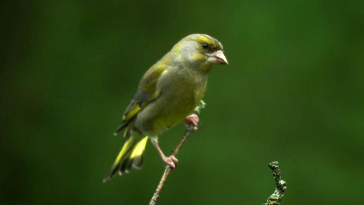 Obrázky žen sání velkých ptáků