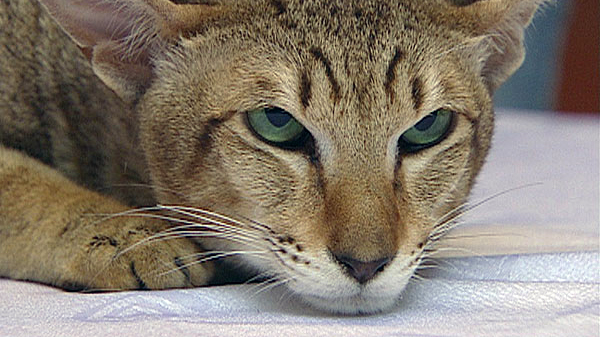 velká kočička pporno videa stříkání zdarma