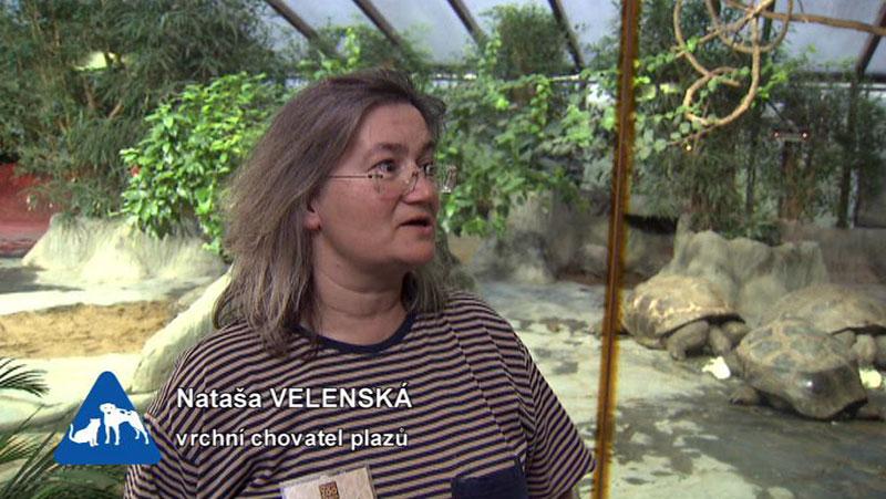 Miniseriály  O chovu exotických zvířat — Chcete mě  — Česká televize 462219dd73