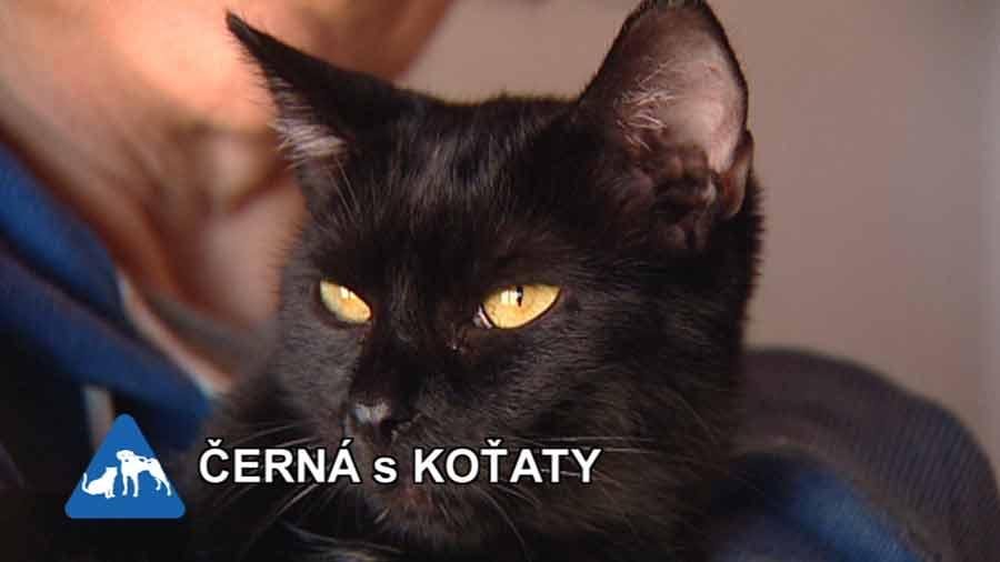 stará černá máma kočička