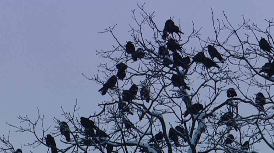 Dvě černé ptáky v jedné černé kočičce