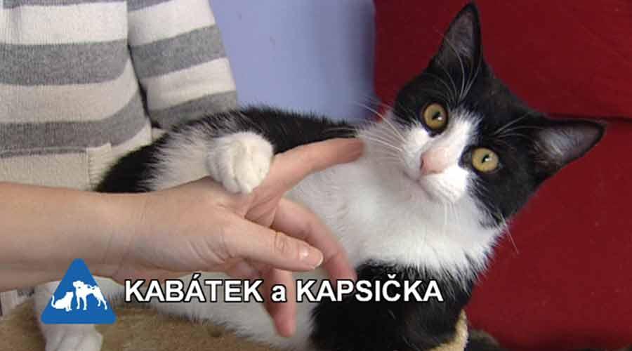 lesbičky prstoklad navzájem kočička