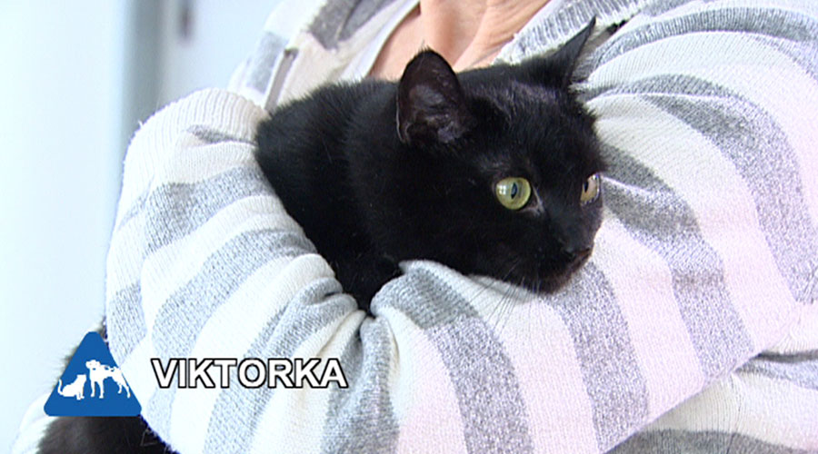 Vdaná černá kočička
