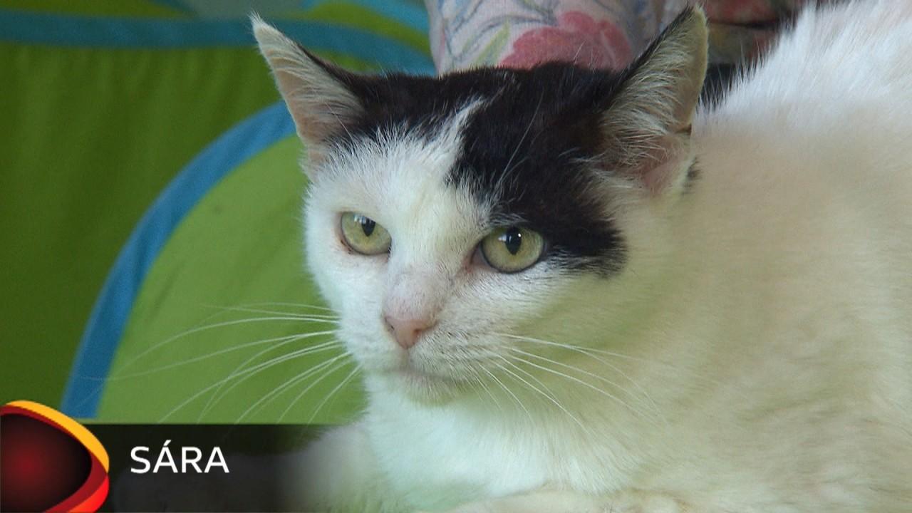 Hluchavka. Smržově na betonu leží už druhý den tři opuštěná koťata, zda je může přivézt.