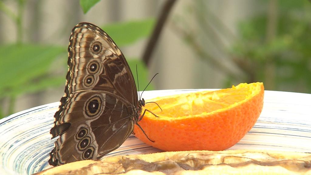 žádné motýly, když chodí Eastenders co hvězdy datování