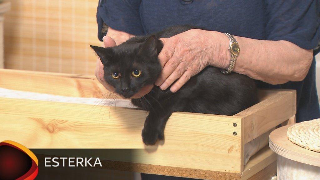 sval černá kočička
