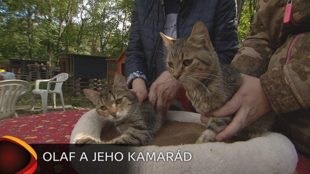 Jak otevřít pevnou kočičku