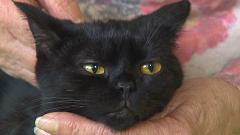 eben chlupatý kočička sólo