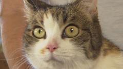 Soutěž kočička stříkat