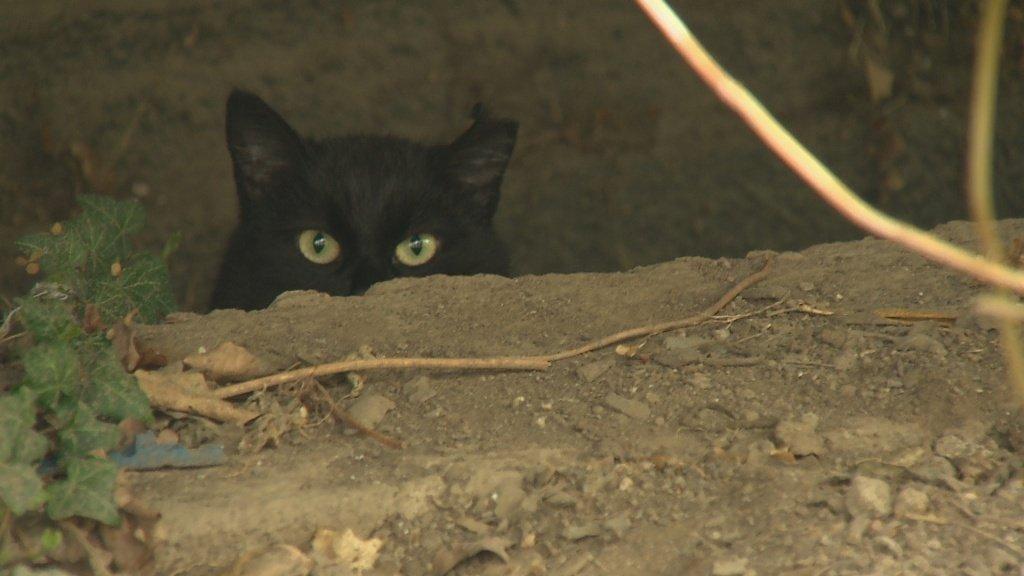 malá černá dospívající kočička
