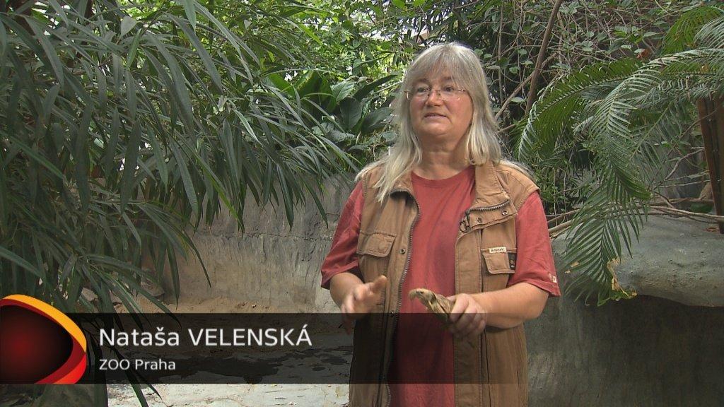 Chcete mě  — Česká televize 5782413dc7