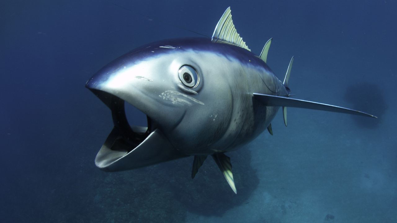 web pro seznamování delfínů