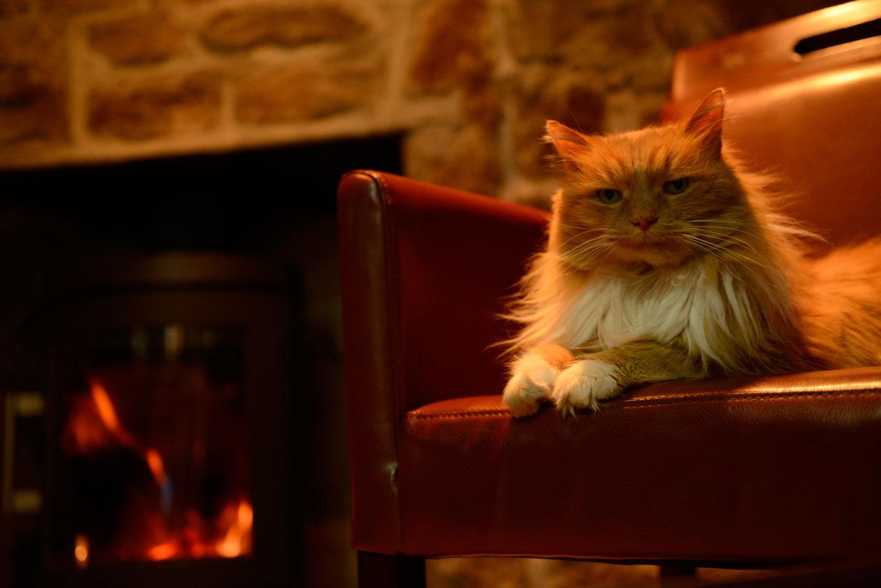 Velké kočičí bradavky