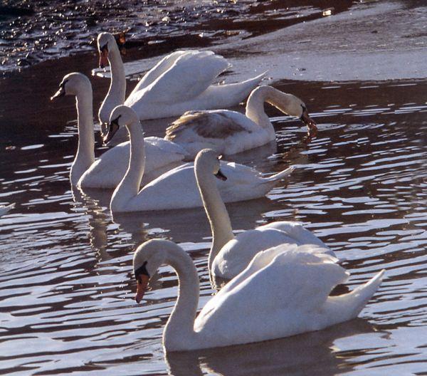 Za rapidní úbytek ptáků v Česku mohou i velké lány.