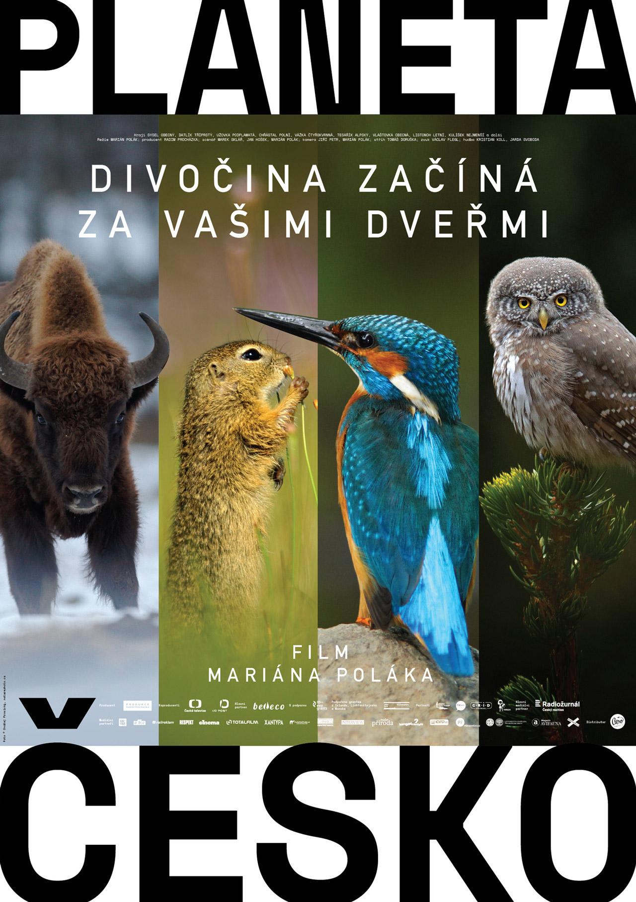 Velký ptáci film