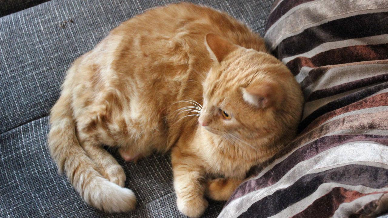 Velké volné kočička fotky