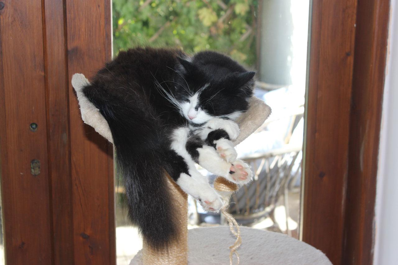 velmi velká kočička