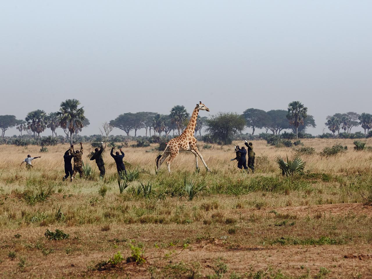 Velké africké zadky
