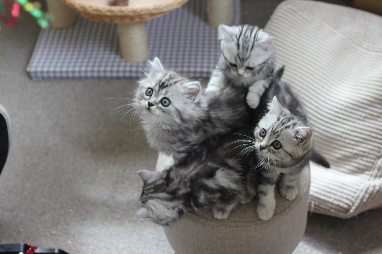 úžasná těsná kočička