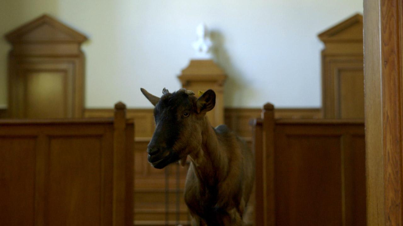 Mají i zvířata svá práva  — Česká televize a7686a2ea5
