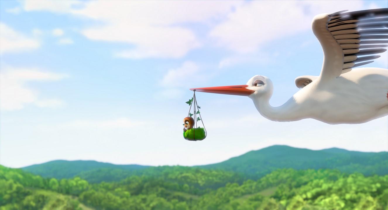 nejlepší ptáci přísavky