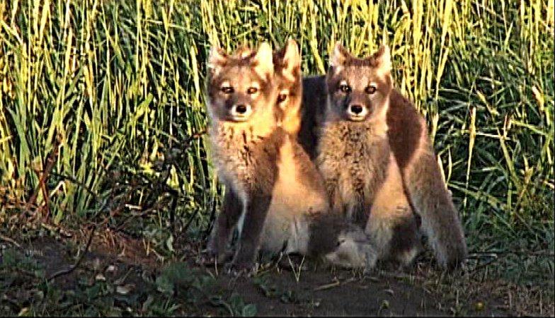 Miláčci a vzteklina — Zoologie — PORT — Česká televize 544e462e7a